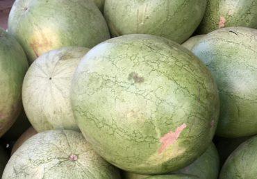 Les premières pastèques du Sénégal arrivent en Espagne